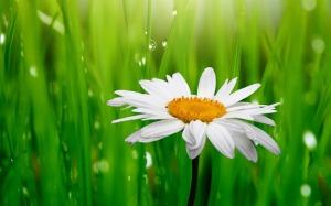 Daisy-flowers-34758616-1440-900